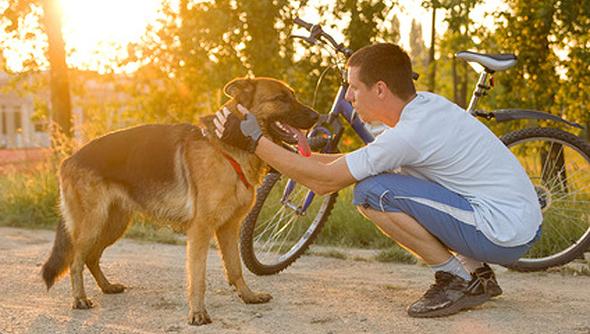 Radfahrer mit Hund - © V&P Photo Studio - Fotolia.com